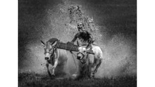 رجل يشارك في سباق سنوي للجواميس المائية في الهند