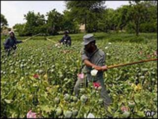 نابودی کشتزارهای خشخاش (عکس از آرشیو)