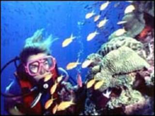 صخره مرجانی