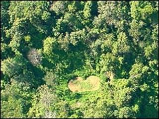 Khoảnh rừng trồng thuốc phiện chụp từ trên cao