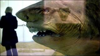 'Cá mập' của Damien Hirst