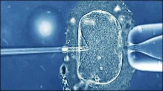 Tratamento de fertilização (arquivo)