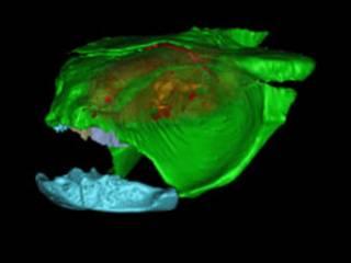 Modelo em 3D do crânio do iniopterygian (Foto: PNAS/Philippe Janvier)