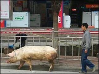农民在街上赶猪