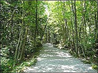 Bosque de Aokiganhara (Foto: gobierno de Yamanashi)