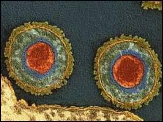 Vírus causador da herpes (arquivo)
