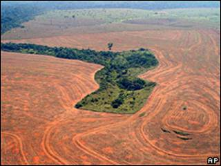 Imagem aérea mostra área desmatada para o cultivo de soja no Pará (AP/Greenpeace/arquivo)