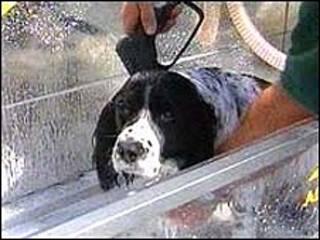Cão tomando banho (arquivo)