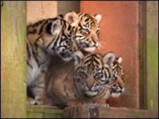 Foto: Ray Wiltshire/Paignton Zoo