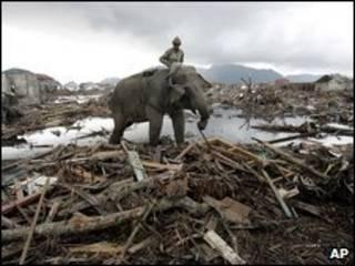 Elefantes ajudam a retirar escombros na Indonésia, no tsunami de 2004