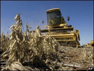 Colheita da soja no Mato Grosso do Sul (AP/arquivo)