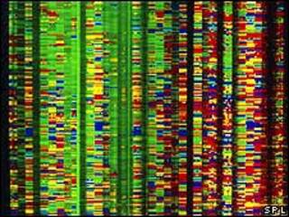 Secuencia de DNA