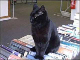 Fidel, el gato