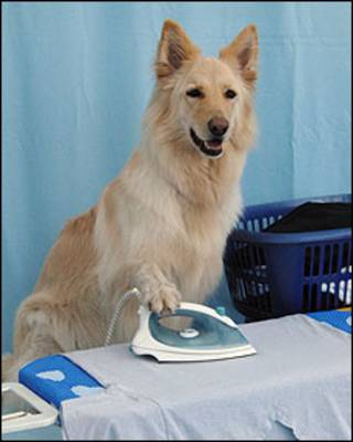 Concurso de mascotas 'Britain's Most talented Pet'