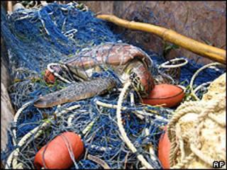 Tartaruga capturada por rede de pesca no litoral do Quênia (arquivo)