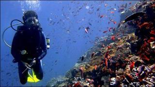 Arrecifes de coral en la isla de Komodo.