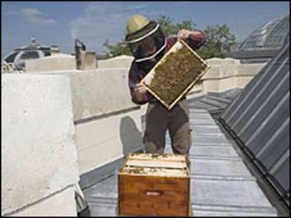 O apicultor Nicolas Guéant no telhado do Grand Palais (divulgação)