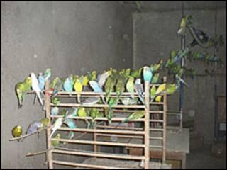 Aves encontradas em apartamento (Foto: Associação Berlinense de Proteção aos Animais/Divulgação)