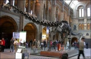 Khủng long ở tiền sảnh Bảo tàng lịch sử tự nhiên ở London