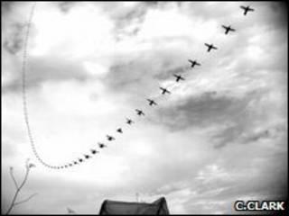 Покадровый полет самца колибри