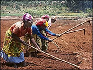Mulheres cultivam campo na África (imagem: AGRA)