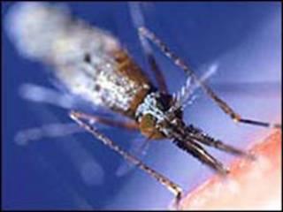 मच्छर