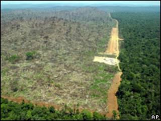 Área desmatada na Floresta Amazônica (foto: AP/Alberto Cesar-GREENPEACE/HO)