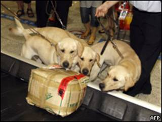 Perros policía clonados