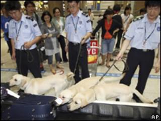 Cães farejadores clonados participam de sua primeira missão, na última sexta-feira (AP)