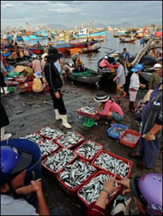 Chợ cá miền Trung