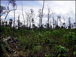 Desmatamento na Amazônia (arquivo)