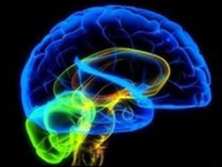 نموذج بالكومبيوتر للمخ البشري