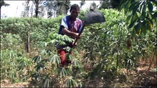 Pequeno agricultor da Colônia Bananal, na Amazônia
