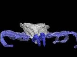 صورة لعنكبوت في حفرية