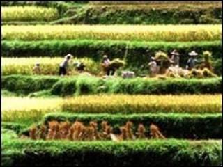 عمال المناطق الريفية في الصين