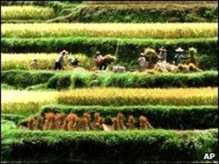 Chính phủ TQ đang thử nghiệm dự án trả nông dân lương hưu