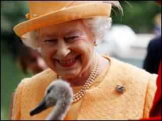 英女王与天鹅