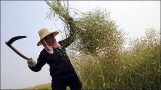 Một nữ nông dân Trung Quốc (Getty Images)