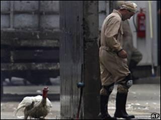Trabajajos de desinfección en granja de aves chilena