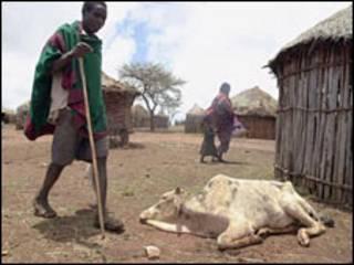 آثار الجفاف في قرية افريقية