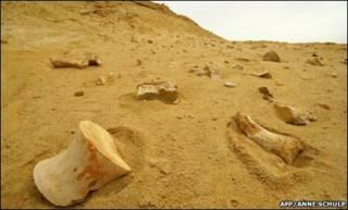 Restos fósiles en Angola