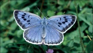 Mariposa azul.