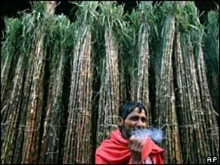 Caña de azúcar en India