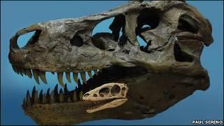 Dinosaurio Raptorex