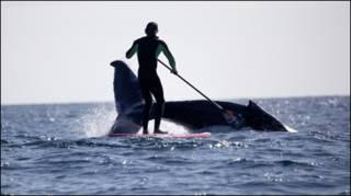 Jamie Mitchell e a baleia. Foto: Liam O'Brien/Jason Muir