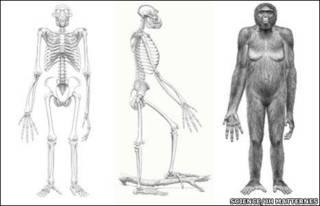 Gráfica de Ardipithecus (Science)