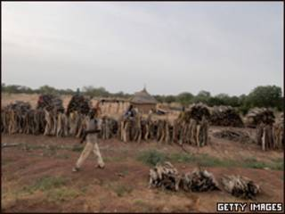 جمع الحطب في أفريقيا