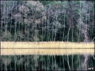 Лес под Минском (снимок из архива)