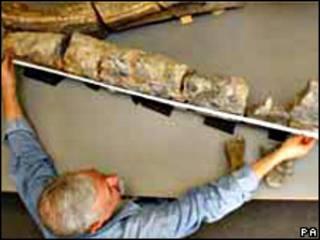 Fósil de pliosaurio