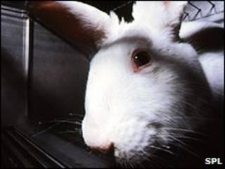 ارنب تجارب
